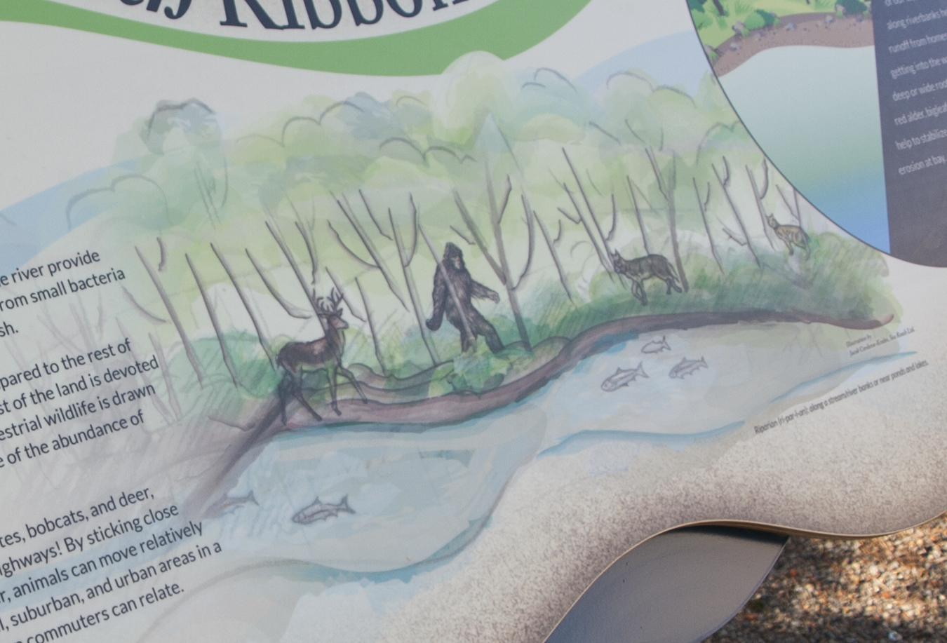 River Ridge - Exhibit Panel 3 Close-up
